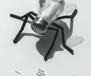 black, poster, and fly image