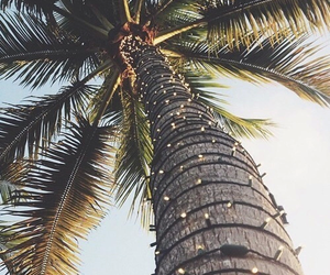 summer, light, and palm trees image