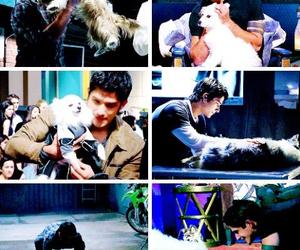 dog, teen wolf, and tyler posey image