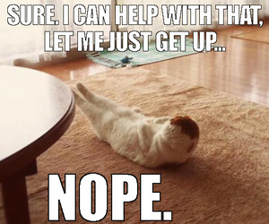 cat, laziness, and funny cats image