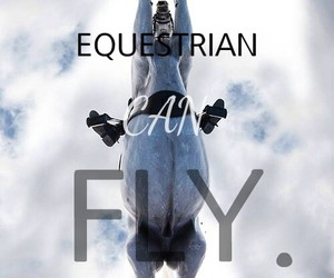 equestrian, fly, and horse image