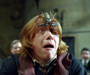harry potter, ron weasley, and spider image