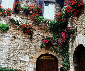 beautiful, flower, and italy image