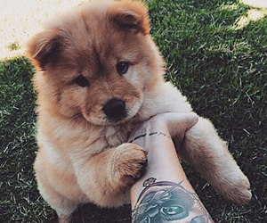 chow chow, cuuute, and dog image