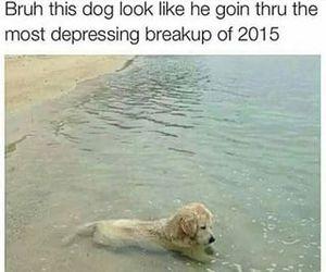 dog, beach, and life image
