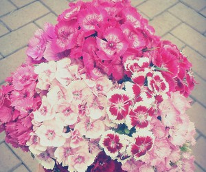 flowers, pink, and flower power in pink image