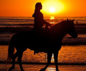 horses and sunset image