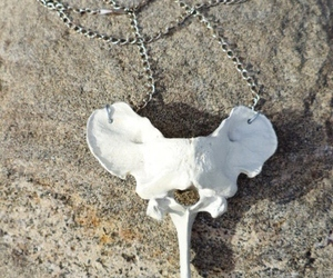 boho, vertebrae, and bone image