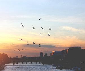 sky, birds, and city image