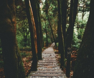 alternative, forest, and hipster image