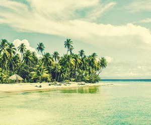 palms, beach, and palm trees image