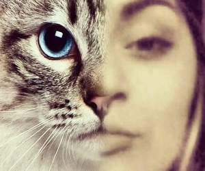 cat, hair, and desing image