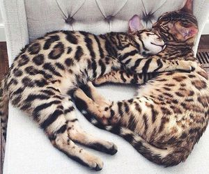 animals, awesome, and casal image