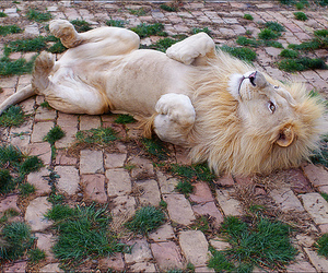 lion and cute image