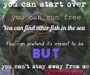 animal, free, and Lyrics image