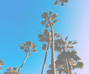 bright, filter, and palm trees image