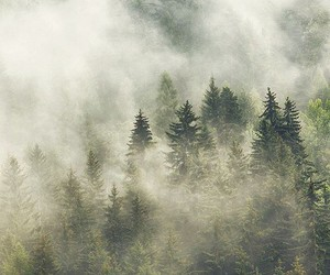 tree, nature, and foggy image