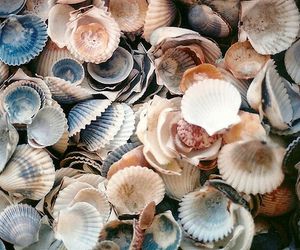 shell, beach, and sea image