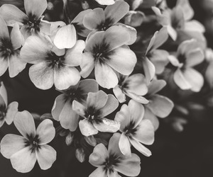 blackandwhite, flowers, and canon image
