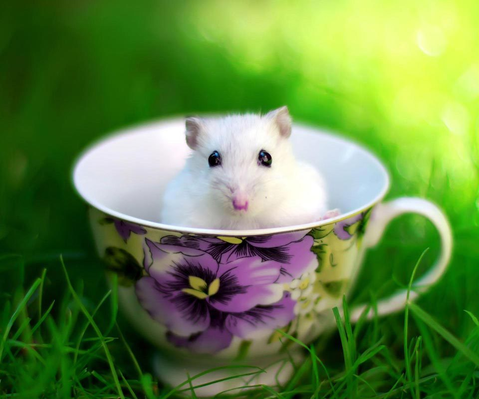 animal, hamster, and mouse image