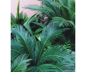 green and palm leaves image