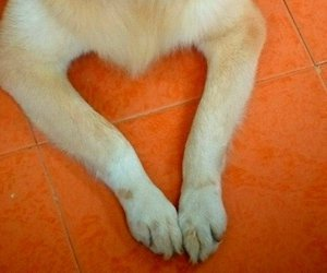 cute animals, dogs, and hearts image