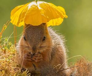 animal and squirrels image