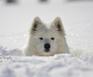 cute animals, snow, and winter image