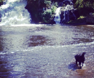 dog, zee, and water image