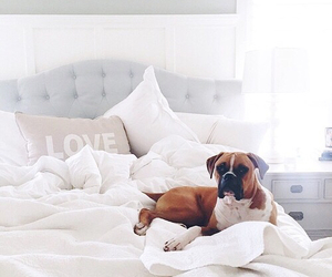 dog, love, and bed image