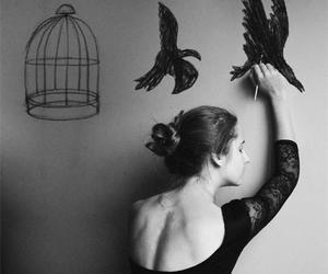 bird, black and white, and free image