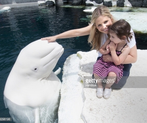 whale. and beluga whale. image
