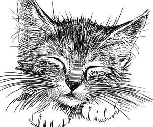 drawing and cat image
