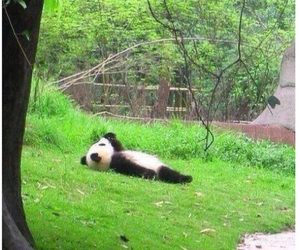 funny, goals, and panda image