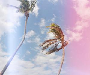 Caribbean, tropical, and coconut image