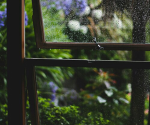 rain, window, and flowers image