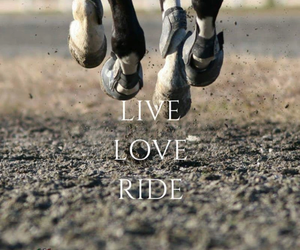 horse, live, and love image