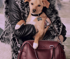 dog, Toulouse, and ariana grande image