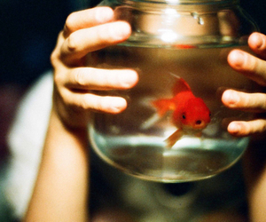 fish, photography, and vintage image