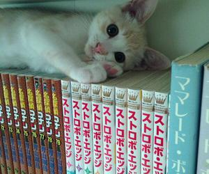 cat, cute, and japan image