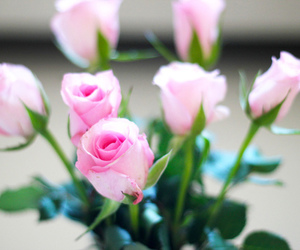 rose, pink, and love image
