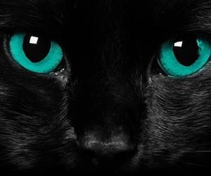 cat, eyes, and gato image