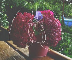 lungs, flowers, and plants image