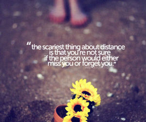 quote, distance, and flowers image