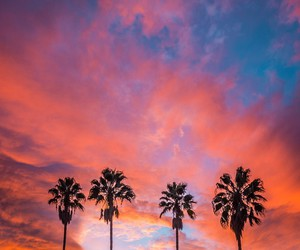 palm trees, clouds, and hipster image