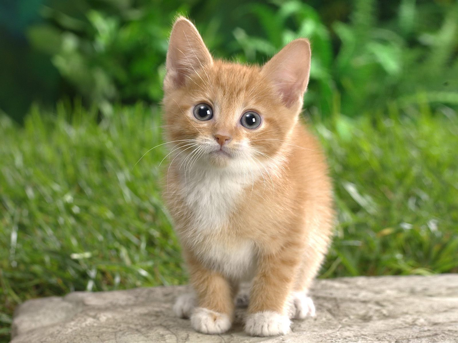 Afbeeldingen Katten