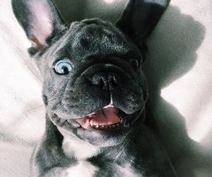 adorable, black, and blue image
