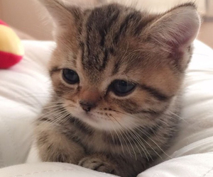 cat, animal, and cute image