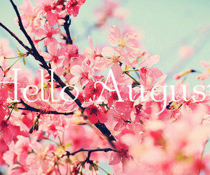 flowers, pink, and hello august image