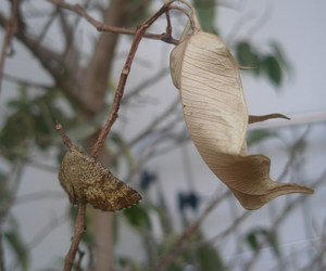 butterfly and leaf image